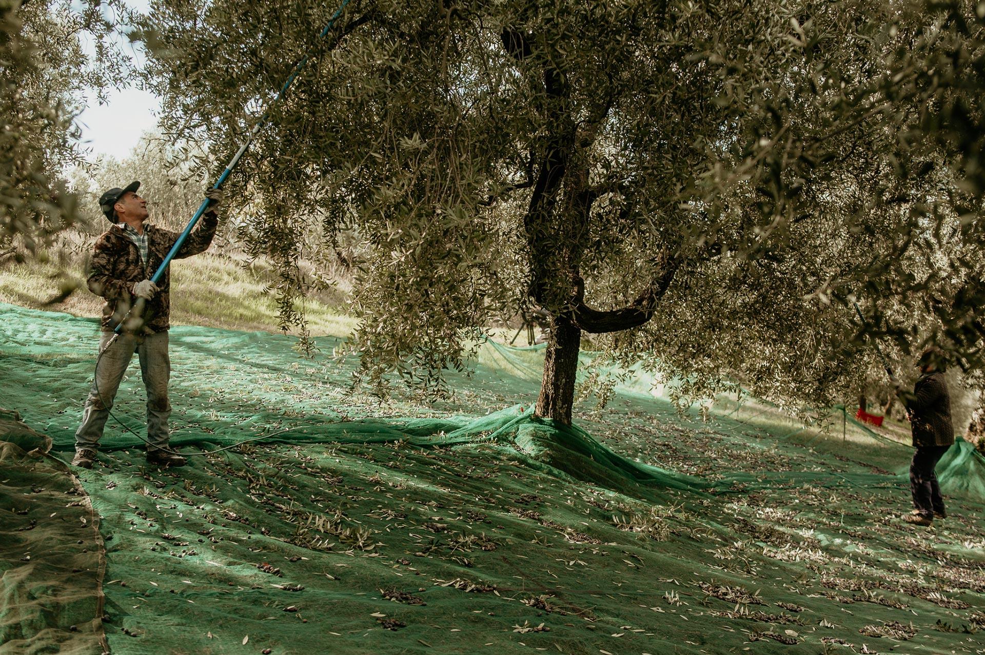 animado-film-produzioni-audiovisive-moricone-olives-02