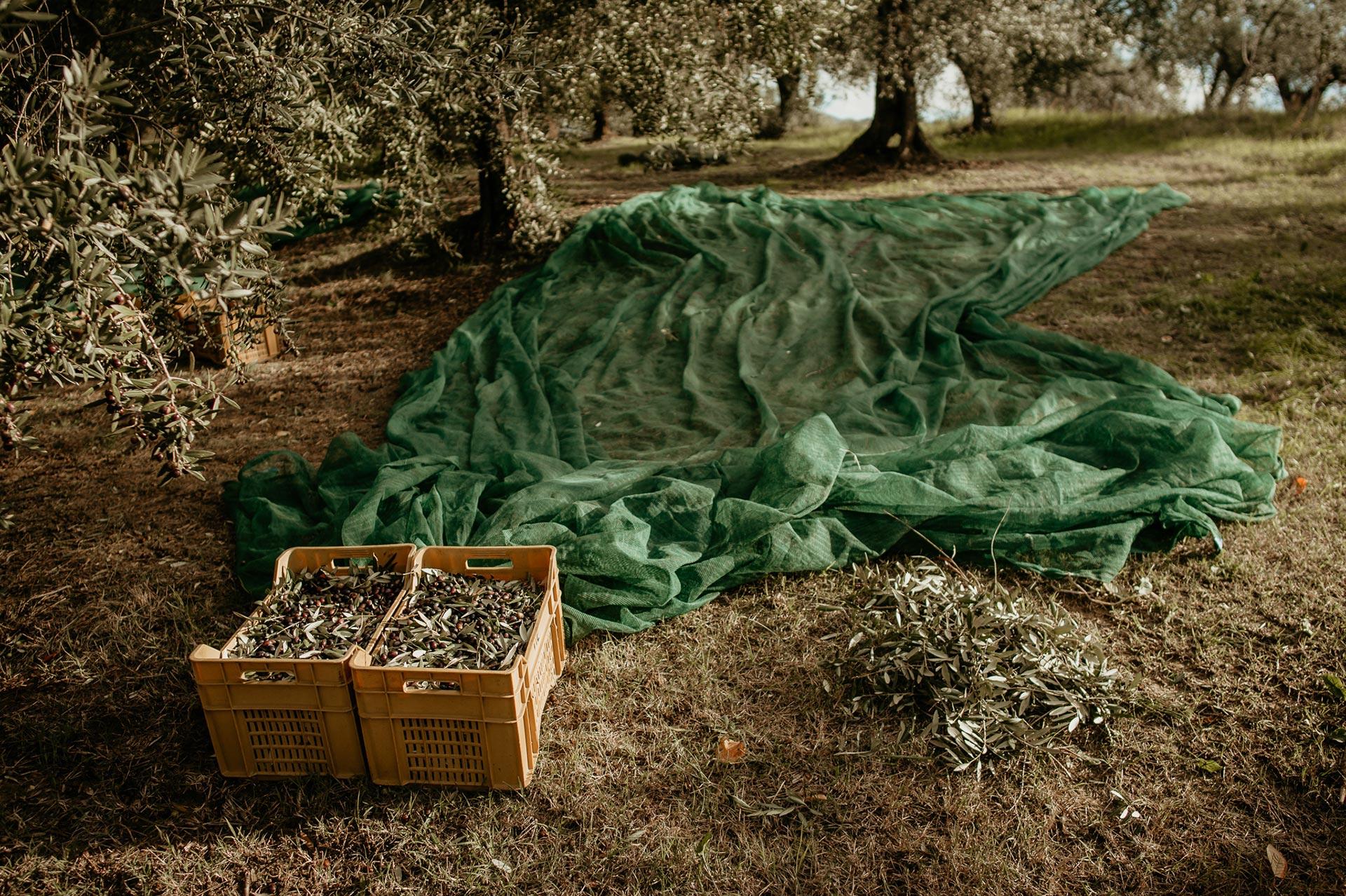 animado-film-produzioni-audiovisive-moricone-olives-03